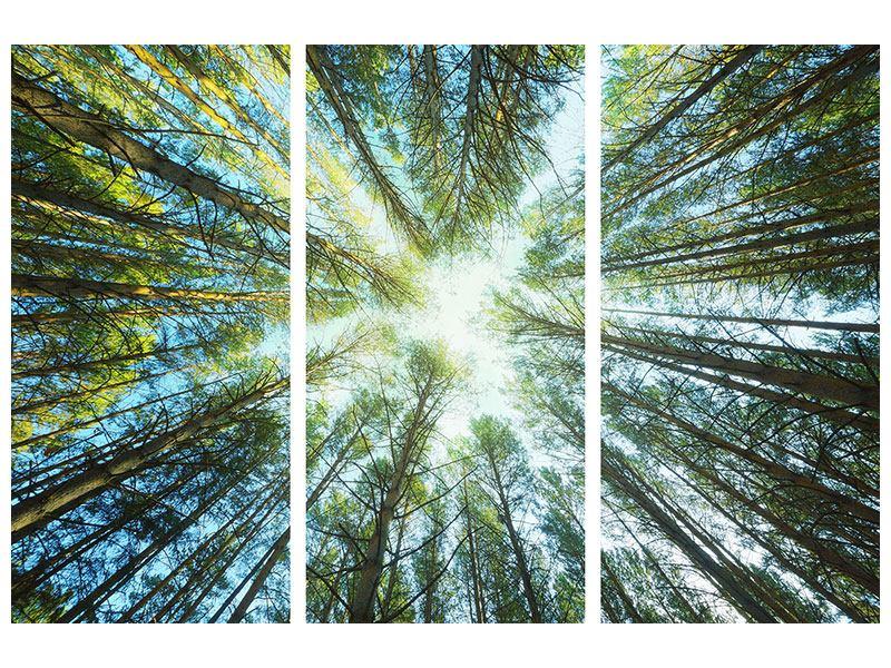 Leinwandbild 3-teilig Kiefernwald