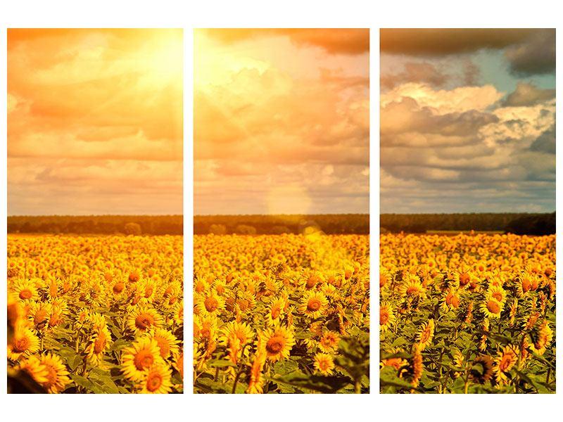 Leinwandbild 3-teilig Goldenes Licht für Sonnenblumen
