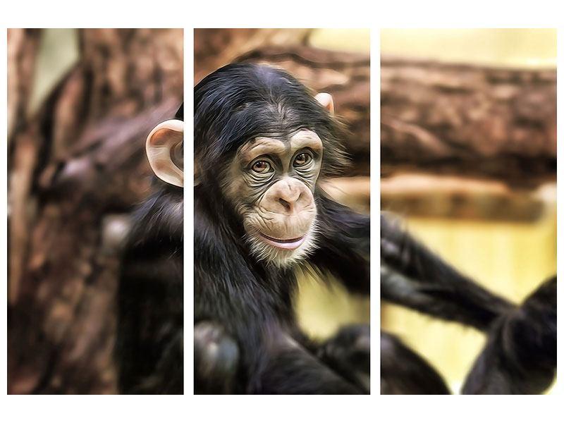 Leinwandbild 3-teilig Der Schimpanse