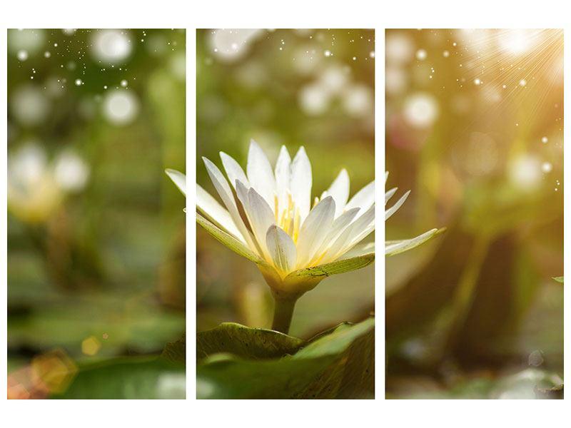 Leinwandbild 3-teilig Lilien-Lichtspiel