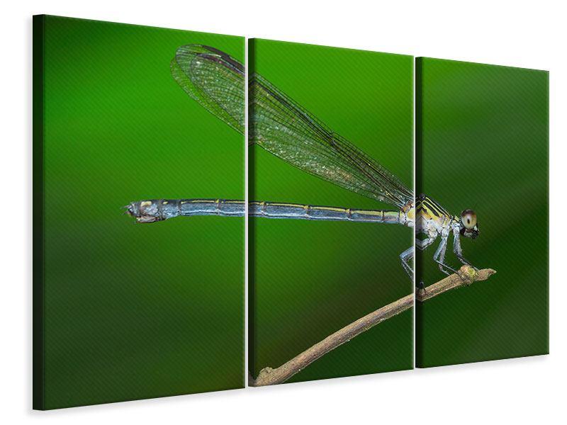 Leinwandbild 3-teilig Die Libelle