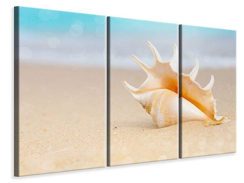 Leinwandbild 3-teilig Die Muschel am Strand