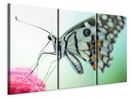 Leinwandbild 3-teilig Schmetterling XXL