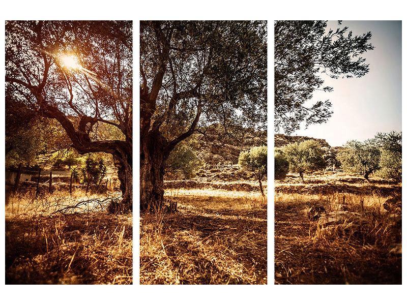 Leinwandbild 3-teilig Olivenhain