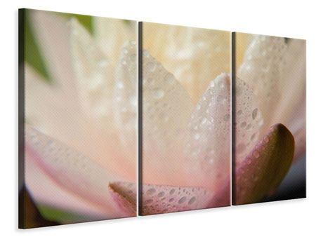 Leinwandbild 3-teilig Close Up Seerose