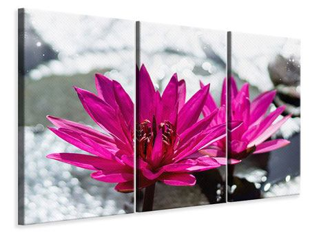 Leinwandbild 3-teilig Seerosenduo in Pink