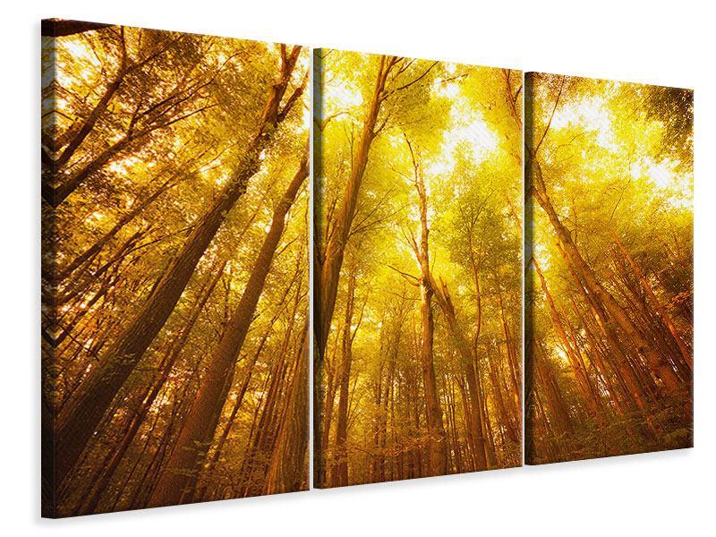 Leinwandbild 3-teilig Herbstwald