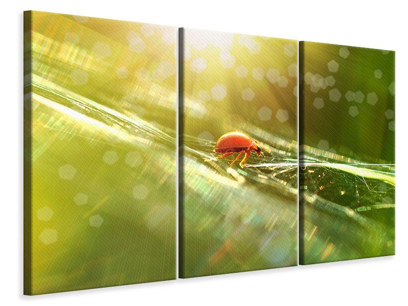 Leinwandbild 3-teilig Marienkäfer im Sonnenlicht
