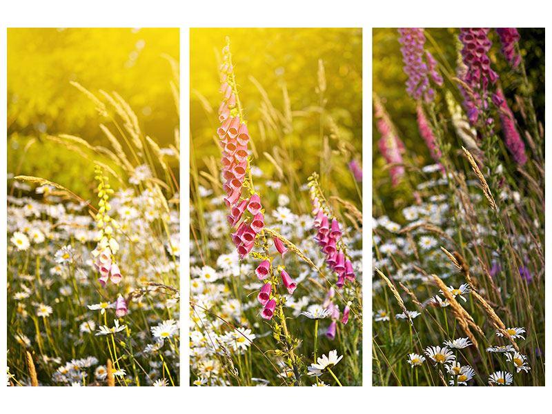 Leinwandbild 3-teilig Sommerliche Blumenwiese
