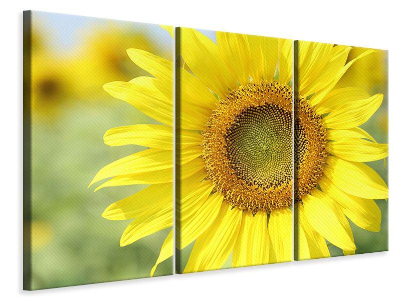 Leinwandbild 3-teilig Die Blume der Sonne