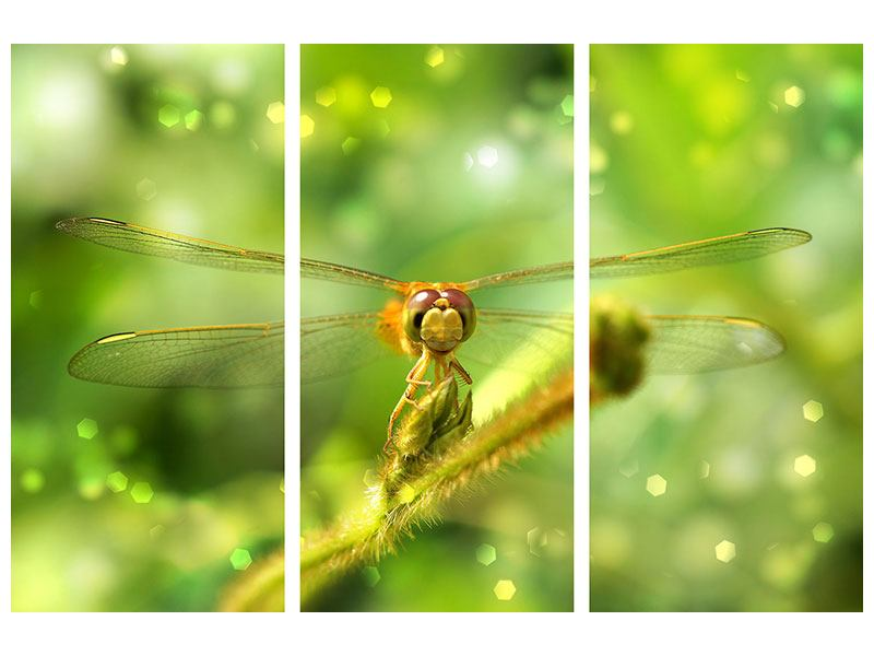 Leinwandbild 3-teilig XXL-Libelle