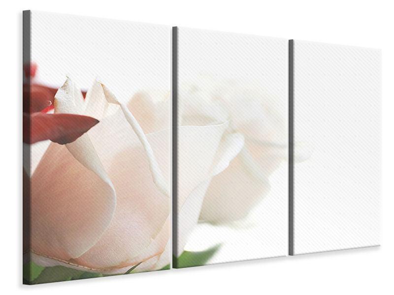 Leinwandbild 3-teilig Herrliche Rosen