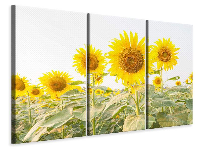 Leinwandbild 3-teilig Das Sonnenblumenfeld