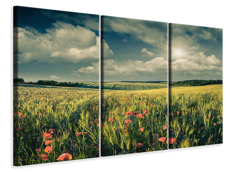 Leinwandbild 3-teilig Der Mohn im Weizenfeld
