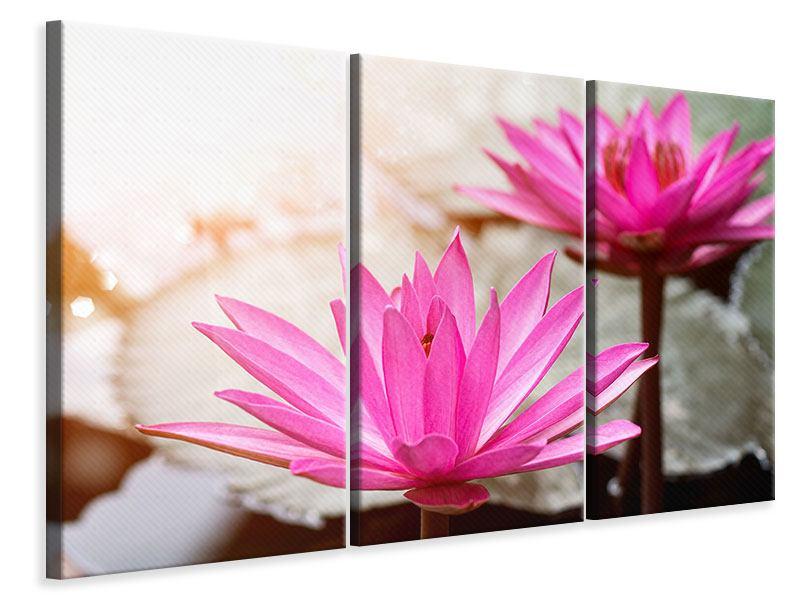 Leinwandbild 3-teilig Lotus-Duo