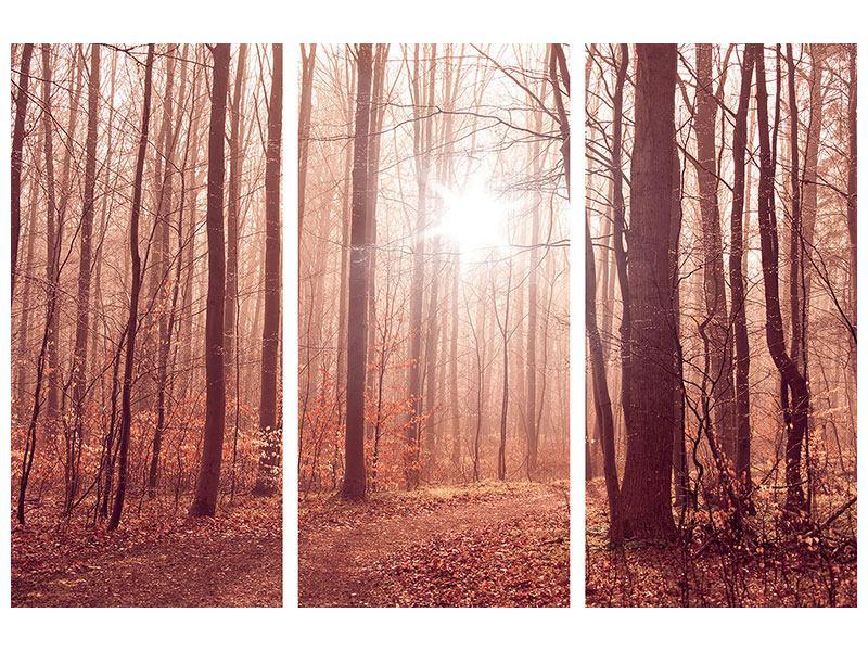 Leinwandbild 3-teilig Sonnenuntergang im Herbstwald