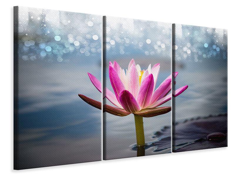 Leinwandbild 3-teilig Lotus im Morgentau