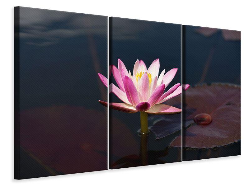 Leinwandbild 3-teilig Seerose in der Abenddämmerung