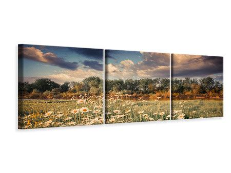 Panorama Leinwandbild 3-teilig Die Wiesenmargerite am Fluss