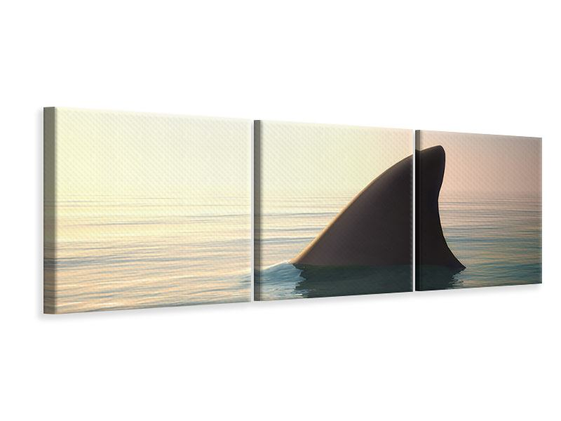 Panorama Leinwandbild 3-teilig Haifischflosse
