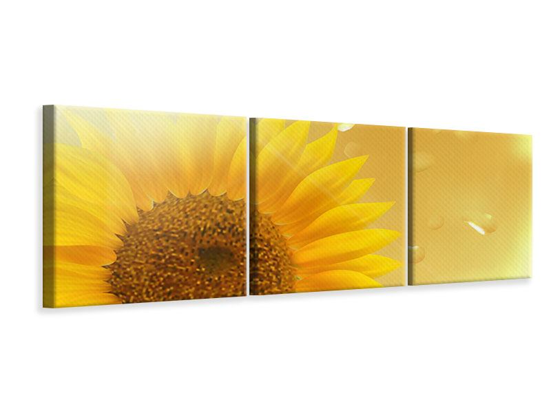 Panorama Leinwandbild 3-teilig Sonnenblume im Morgentau