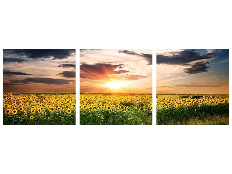Panorama Leinwandbild 3-teilig Ein Feld von Sonnenblumen