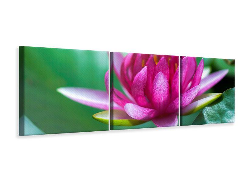 Panorama Leinwandbild 3-teilig Lotus in Pink