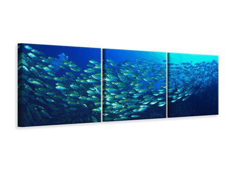 Panorama Leinwandbild 3-teilig Fischschwarm
