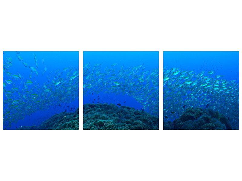 Panorama Leinwandbild 3-teilig Fischschwärme