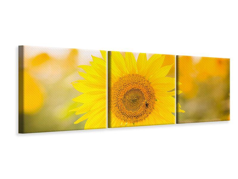 Panorama Leinwandbild 3-teilig Sunflower