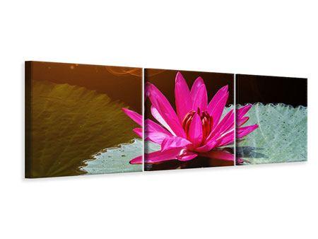 Panorama Leinwandbild 3-teilig Der Frosch und das Seerosenblatt