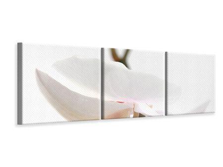 Panorama Leinwandbild 3-teilig XXL Orchideenblüte