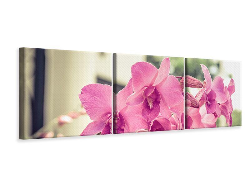 Panorama Leinwandbild 3-teilig Ein Fensterplatz für die Orchideen
