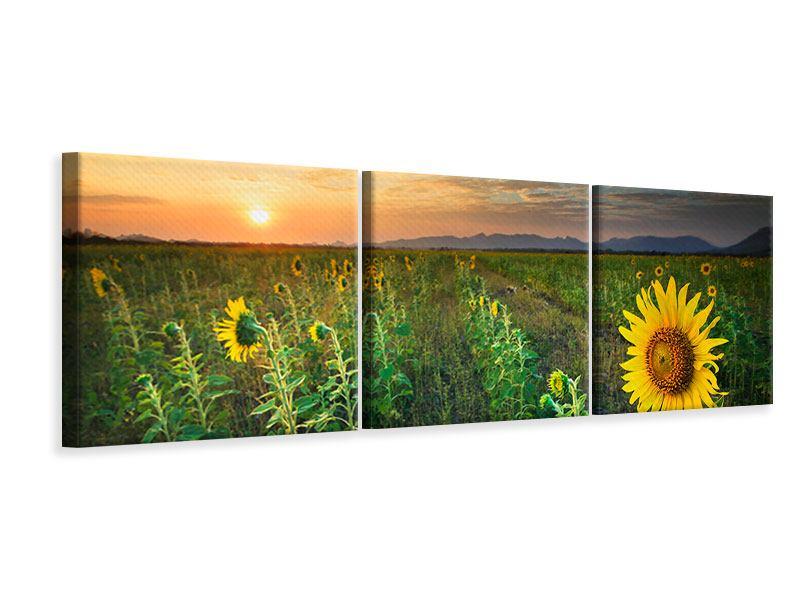 Panorama Leinwandbild 3-teilig Sonnenblumenfeld im Abendrot
