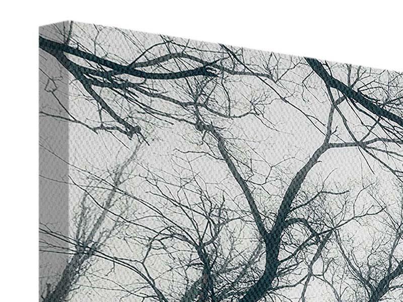 Panorama Leinwandbild 3-teilig Mysteriöse Stimmung im Wald