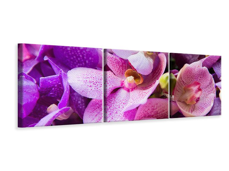 Panorama Leinwandbild 3-teilig Im Orchideenparadies