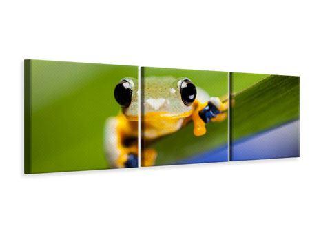 Panorama Leinwandbild 3-teilig Frosch XXL