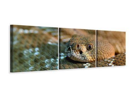 Panorama Leinwandbild 3-teilig Viper