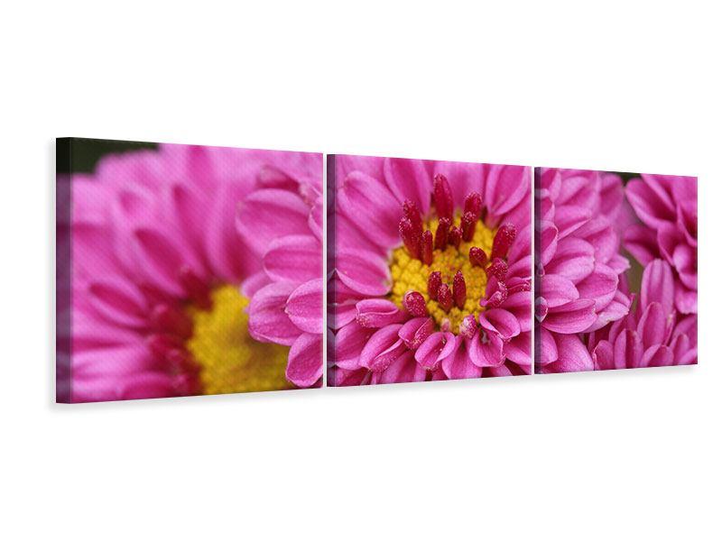Panorama Leinwandbild 3-teilig Chrysanthemen