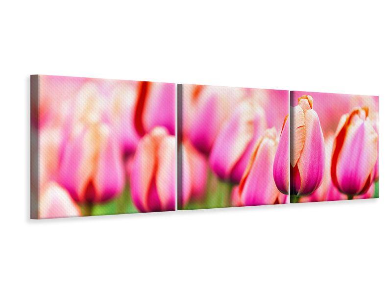 Panorama Leinwandbild 3-teilig Pretty in Pink