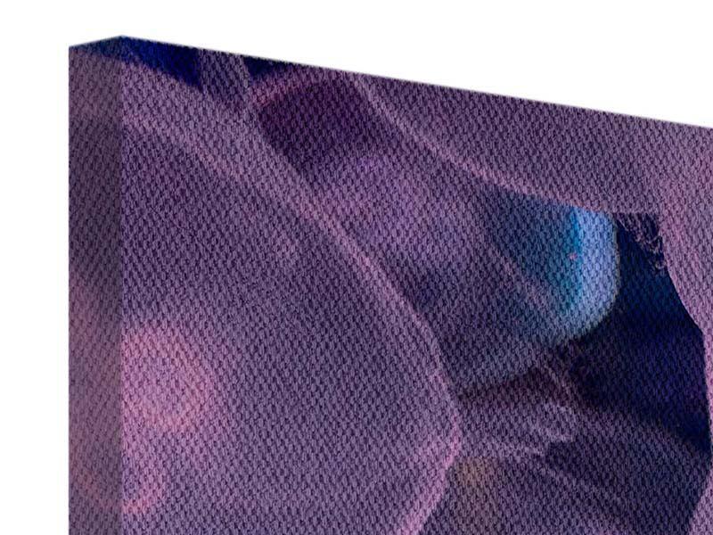 Panorama Leinwandbild 3-teilig Die Schönheit der Quallen