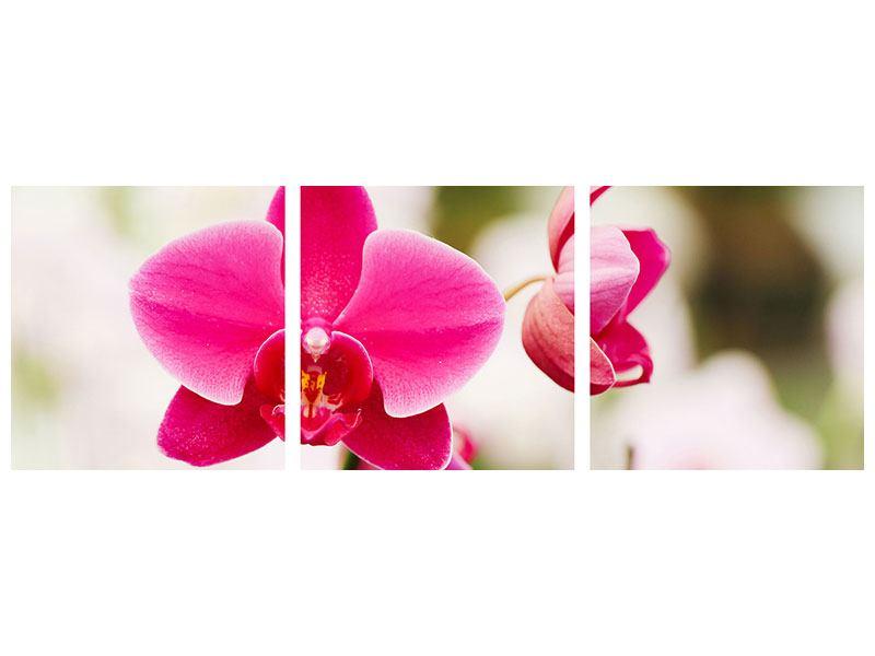 Panorama Leinwandbild 3-teilig Perspektivische Orchideen