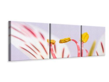 Panorama Leinwandbild 3-teilig Close Up Die exotische Schönheit