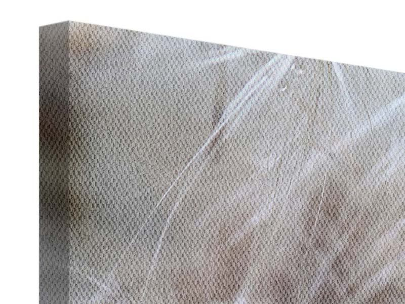 Panorama Leinwandbild 3-teilig Close up Blütenfasern