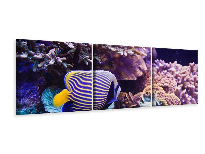 Panorama Leinwandbild 3-teilig Faszination Unterwasser