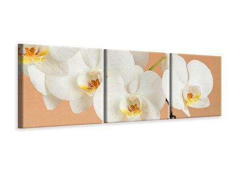 Panorama Leinwandbild 3-teilig Weisse Orchideenblüten