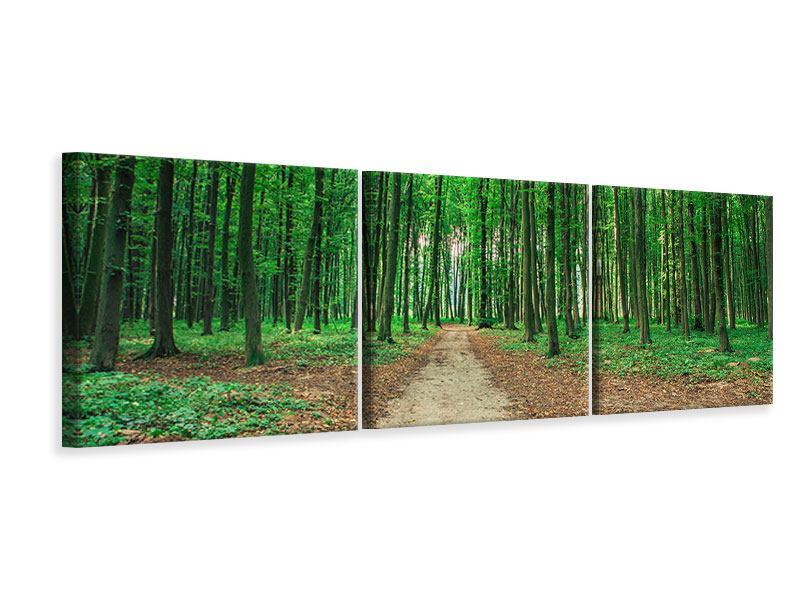 Panorama Leinwandbild 3-teilig Tannenwald