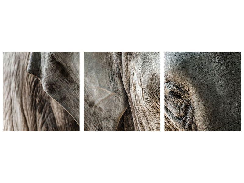 Panorama Leinwandbild 3-teilig Close Up Elefant