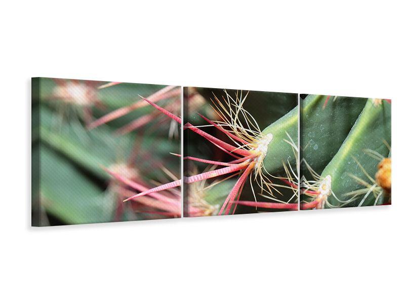 Panorama Leinwandbild 3-teilig Die Kaktusblüte