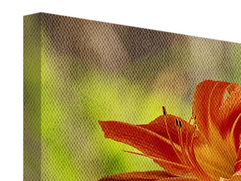 Panorama Leinwandbild 3-teilig Lilien in der Natur